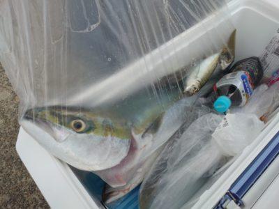 <p>中村様 沖の北 のませ釣りでハマチ〜メジロ!今朝はルアーでもハマチ・サゴシ釣れてました。</p>
