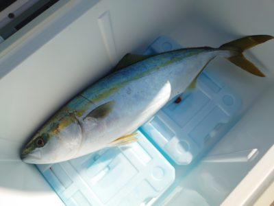<p>タニグチさん 沖の北 ショアジギでハマチ!今朝もルアー・のませでサゴシ・ハマチ・メジロ釣れてました♪</p>