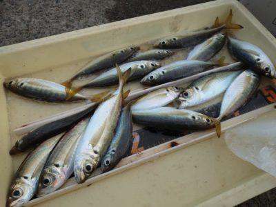 <p>沖の北 今朝は7時すぎまで小アジ・中アジが釣れていました!他にウルメイワシ・マイワシ・20〜30cmのサバが釣れていましたよ。</p>