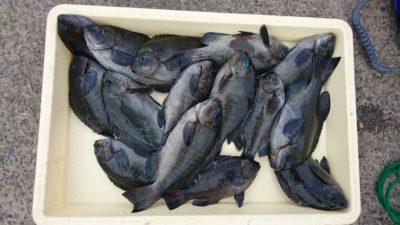 <p>山田様 沖の北 フカセ グレGET</p><p>今日もグレは良く釣れているようです(^^♪</p>
