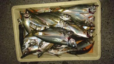<p>津田名人様 沖の北 サビキ 中アジとサバGET</p><p>水温が安定したのか、今日の夕方は32cmまでのアジ多数釣れてます!朝も釣れてくれたら良いんですけどね〜^^;</p>