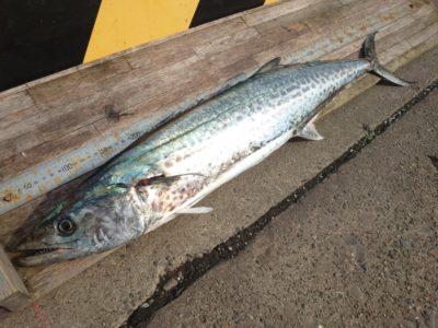 <p>沖の北 ショアジギでサゴシ!サワラに近いサイズ♪</p>