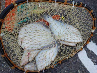 <p>沖の北 投げ釣りでカレイ!水温低下でサビキの釣果はなし…。青物も厳しいですね。カレイ狙い・エビ撒きで根魚とハネ狙い・銀平でヒラメ狙いがメインかな。</p>