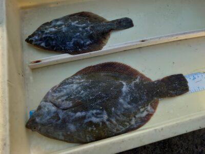 <p>沖の北 投げ釣りでカレイ!産卵も終盤って感じです。今朝はだいぶ潮が早かったですね。オモリは重ためでお願いします。</p>