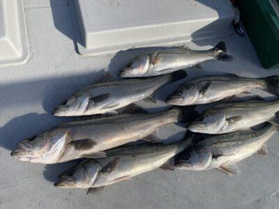 <p>福山様 沖の北 エビ撒きで67cmまでのハネ7匹!!1番船〜9時までの釣果です♪</p>