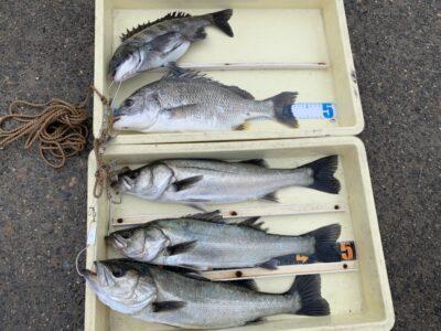 <p>徳山様 沖の北 エビ撒きでハネ・チヌ・キビレGET♪この他にセイゴと50cm前後のハネも釣れたそうですがリリースされたそうです^ ^1番船〜9時までの釣果です!</p>