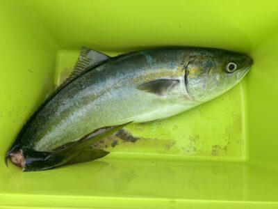 <p>沖の北 ショアジギでメジロ!!今年も60〜65cmぐらいの青物良さそうですね^ ^</p>
