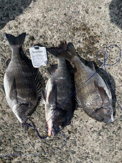 <p>真田様 沖の北 奥の方 落し込み/パイプでチヌ3枚!5時半〜9時での釣果です。</p>