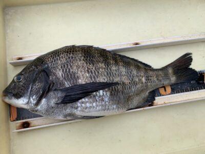 <p>斎藤様 旧一文字白灯 フカセ釣りで38cmのチヌ!!ハネ・チヌ釣果でスタンプ押してます♪</p>