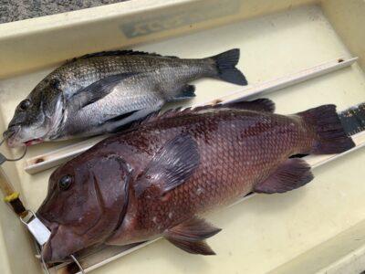 <p>影山様 旧一文字赤灯 フカセ釣りでチヌとカンダイ!!8日の釣果です♪</p>