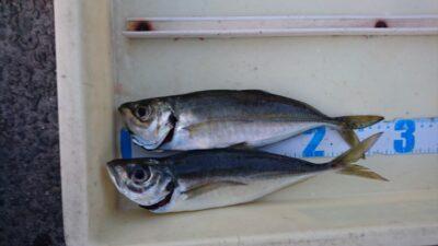 <p>白田様 沖の北 投げサビキ アジGET</p><p>夕方の釣果です。オイルフェンス内向きがまだ可能性ありそうです</p>