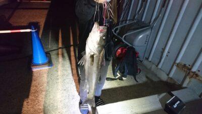 <p>釣りガール様 中波止2番 ルアー シーバスGET</p><p>小さいサイズは良く釣れたようでした。外向きでサヨリも良くルアーにアタックしてくるとの事でした!今日はほぼ全員安打です(^^♪</p>