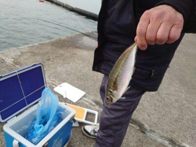 <p>沖の北 飛ばしサビキで中アジ!最終3匹とのことでした。釣れれば大きいんですが数が伸びない…。</p>