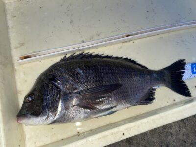 <p>佐多様 沖の北 フカセ釣りでチヌ!!今日は豆サバが沸いたりとフカセは厳しそうでした(ToT)</p>