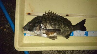 <p>高野様 沖の北 紀州釣り チヌ40cmGET</p><p>前回よりサイズUPしましたね(^^♪</p>
