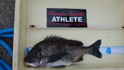 <p>黒鯛釣り師様 旧一文字3番 ヘチ釣り チヌGET</p><p>チヌは様々な釣り方で釣れています(^^♪</p>
