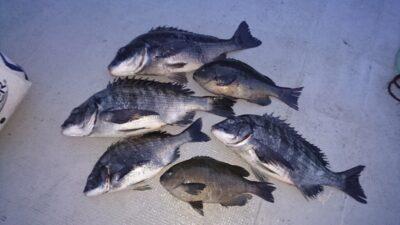 <p>佐多様 沖の北 フカセ チヌとグレGET</p><p>グレの姿もちらほら見るようになってきました(^^♪</p>