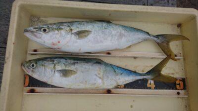 <p>中川様 沖の北 ショアジギ ハマチサイズGET</p><p>青物狙う方は大きめのクーラーを持ってきてくださいね!きちんと冷やさないとすぐに痛みますよ</p>