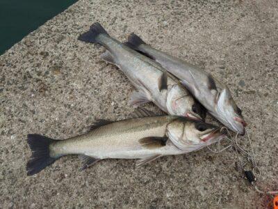 <p>西川様 沖の北 エビ撒き釣りでハネ!最終4匹でした♪お見事♪</p>