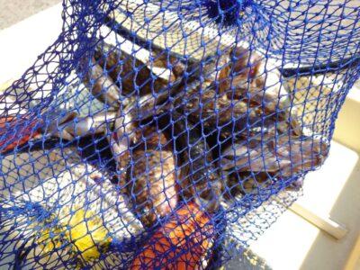 <p>山岸様 沖の北 エビ撒き釣りで根魚!ちょっと増えてきました♪</p>