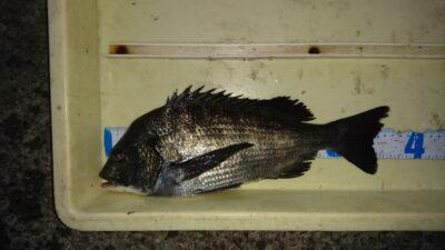 <p>佐多様 沖の北 フカセでチヌGET!</p><p>小鯖が沸いているのでオキアミだと残りにくいです。コーンを使ってくださいね。</p>