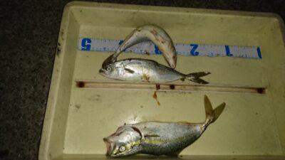 <p>沖の北 ルアー ツバスサイズGET</p><p>この時期の魚は傷みやすいので、しっかり冷やしてくださいね(^^♪</p>