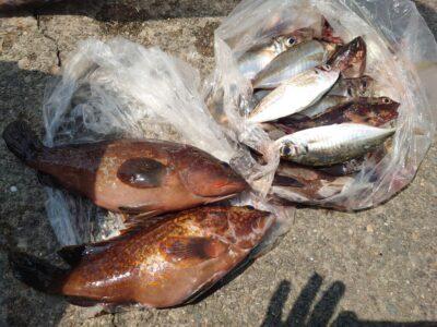 <p>川原様 沖の北 外向き エビ撒き釣りでアコウ、ガシラ、メバル、中アジ!</p>