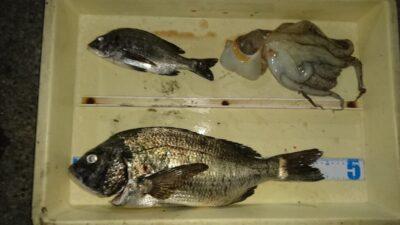 <p>アサヒマシーン釣りクラブ様 沖の北 紀州釣り チヌとタコGET</p><p>タコも紀州釣りで釣れたそうです(^^♪テンヤにエサを付けて放置したほうがタコ釣れるかも・・</p>