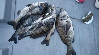 <p>熊取の田中様 沖の北 落とし込み チヌ~47cmまで5尾GET</p><p>17:30頃から良く釣れたそうです(^^♪</p>