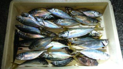 <p>林様 沖の北 サビキ アジGET</p><p>今日はアジ釣れてる方と釣れていない方の差が大きいようでした</p>