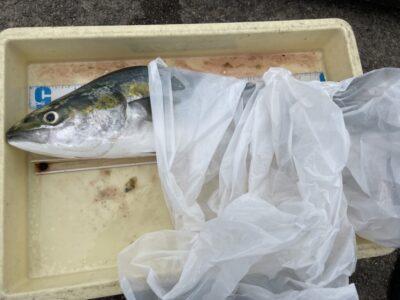<p>つりワゴン様 沖の北 のませ釣りでメジロ^ ^良型狙いはのませ釣りが強いですね♪おめでとうございます^o^</p>