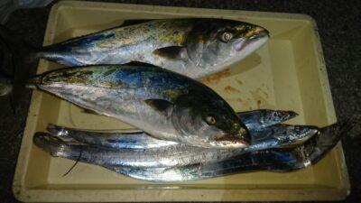 <p>立花様 沖の北 飲ませとウキ釣り メジロとタチウオGET</p><p>青物からタチウオのリレー釣りがお勧めですね(^^♪</p>