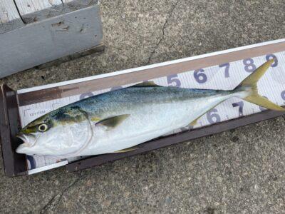 <p>中村様 沖の北 飲ませ釣りで83cmのブリ!!!!飲ませは大型の確率が高いですね♪♪おめでとうございます(^o^)</p>