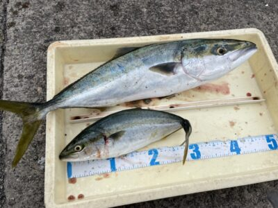 <p>平井様 沖の北 ショアジギでハマチ〜メジロ2匹 GET!!</p>