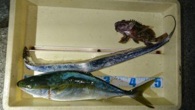 <p>沖の北 ルアー ハマチとタチウオGET</p><p>最近青物も芳しくありませんねー</p>