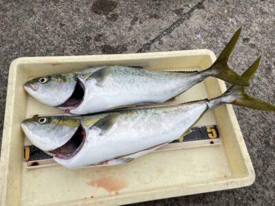 <p>ゲシリン様 沖の北 飲ませ釣りでメジロ2匹 GET♪♪今日も青物好調です♪</p>